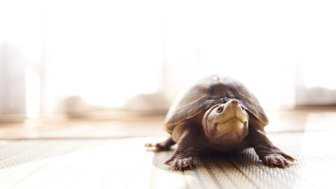 Schildkröten in Massen in Haus auf Madagaskar entdeckt