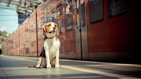 Hund wartet 4 Jahre lang an derselben Stelle: Als seine Besitzer ihn finden, reagiert er völlig unerwartet