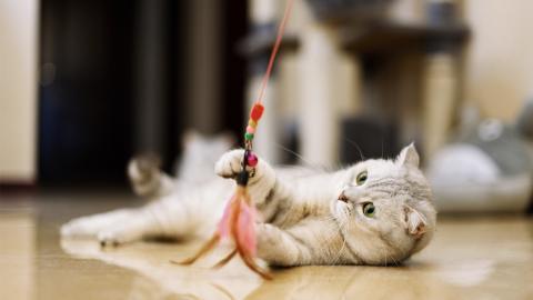 Katzenspielzeug: Diese fünf Gegenstände sind für eure Katze gefährlich