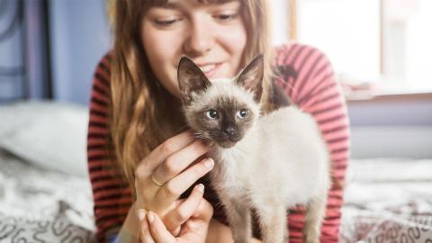 Zwei von drei Menschen verbringen lieber Zeit mit ihrer Katze als mit Freunden. Und ihr?