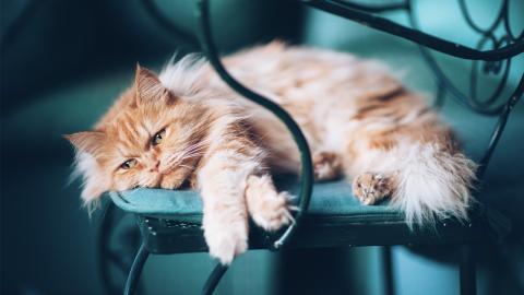 Katze hat Besitzer seit 3 Tagen nicht gesehen: Ihre Reaktion ist Gold wert