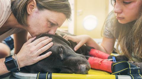Warum das Ableben eines Hundes so schlimm ist wie der Tod eines Verwandten