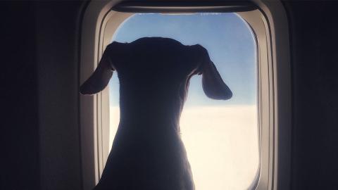 Diese Hunderassen darfst du auf gar keinen Fall mit ins Flugzeug nehmen