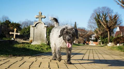 Hund besucht 11 Jahre lang das Grab seines Herrchens, doch dann nimmt die Geschichte eine traurige Wendung