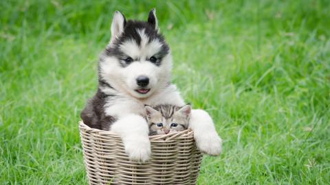 Kätzchen Rosie denkt, es sei ein Husky: Der Grund dafür ist herzzerreißend