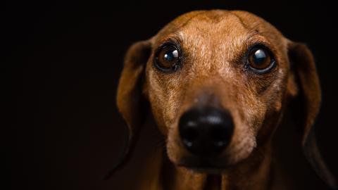 Hund zittert wie wild, als er ins Tierheim kommt: Dann nähert sich ihm die Tierpflegerin