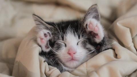 Kitten kämpft ums Überleben: Dann steht ihr ein tierischer Freund beiseite