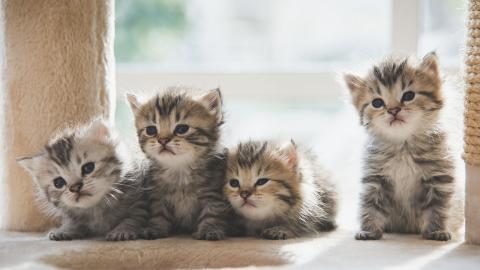 Mit diesen 10 Tipps leben Katzenbabys sich perfekt im neuen Zuhause ein