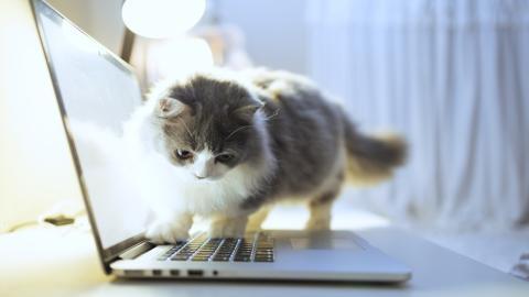 Katzen: Darum machen sie es sich auf unserer Computertastatur bequem