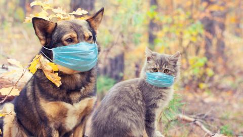 Social Distancing gilt jetzt auch für unsere Haustiere
