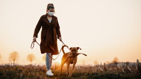 Corona: Hunde erhöhen Risiko einer Corona-Infektion um 75 %