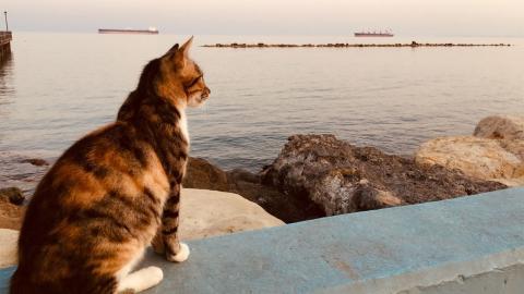 Katze starrt jeden Tag aufs Meer: Der Grund begeistert die Zuschauer