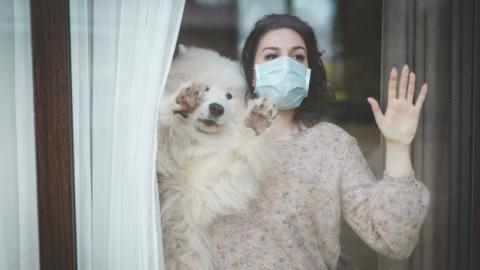 Ausgangsbeschränkungen für Tiere: Frau hat originelle Idee, um ihren Hunden soziale Kontakte zu ermöglichen