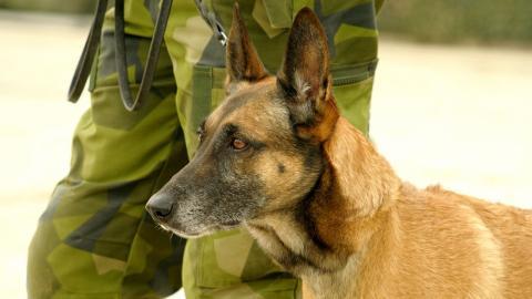 Bombenspürhund rettet 30 Soldaten: So dankt es ihm einer der Männer
