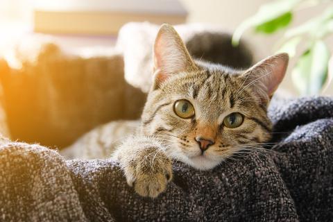 Haustierliebe: Warum dich deine Katze für ihre Mama hält