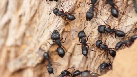 Handy filmt im Ameisenhaufen: Ihre Reaktion sollte uns zu denken geben