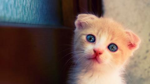 Katze: Mit diesen Fehlern verletzt ihr eure Fellnasen unbewusst