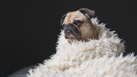 Wenn Viren Haustiere heimsuchen: Diese Hausmittel helfen!