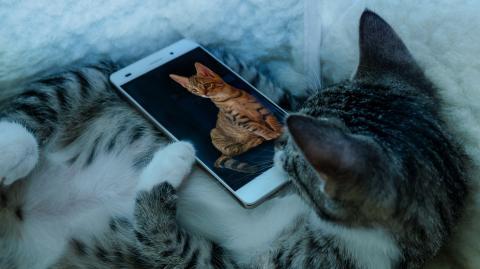 Miau? Wie du deine Katze dank künstlicher Intelligenz endlich verstehst