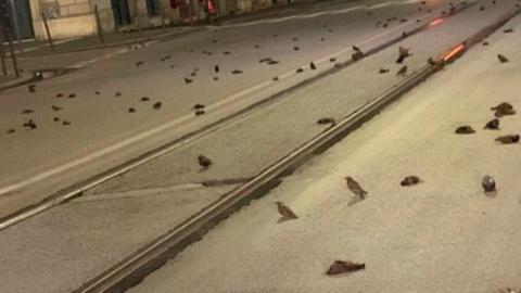 Rom: Das mysteriöse Massensterben von hunderten Vögeln in der Silvesternacht