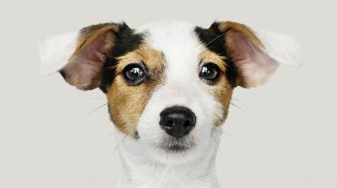 Faszination Hundegehör: Doch das können selbst unsere Vierbeiner nicht hören