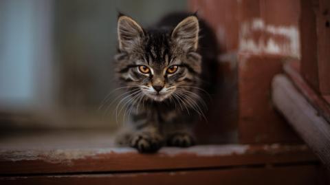 So weckst Du das Raubtier in deiner Katze