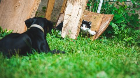 Katze vs. Hund: Die beiden Haustiere im großen Vergleich