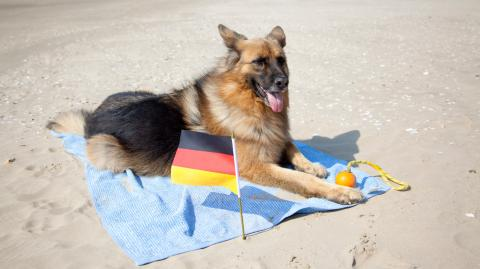 """""""Sitz!"""", """"Platz!"""" und """"Aus!"""": Deutsche Hunde-Kommandos im Trend"""