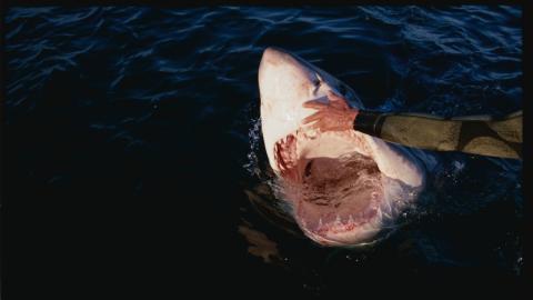 Held oder Poser: Mann rettet einen Hai mit bloßen Händen vor dem Ertrinken
