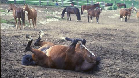 Pferd hat höllische Koliken, dann eilt ein anderes Tier zur Hilfe