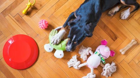 Zerren, Kuscheln, Kauen: Dieses Spielzeug braucht dein Hund