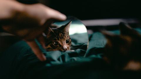 Tierpsychologie: Kopiert eine Katze die Persönlichkeit ihres Besitzers?