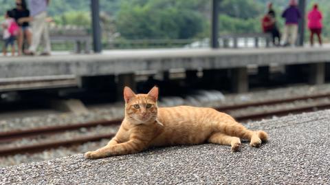 """""""Cat-astrophe"""" in London: Katze zwingt Zugreisende zum Aussteigen"""