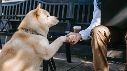 Achtung fremder Hund: Diese 3 Fehler solltest du nicht machen