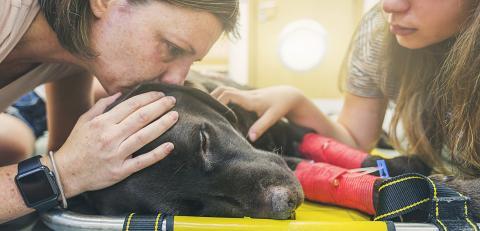 Einschläfern: Tierarzt erklärt, was ein Haustier kurz vor dem Tod empfindet