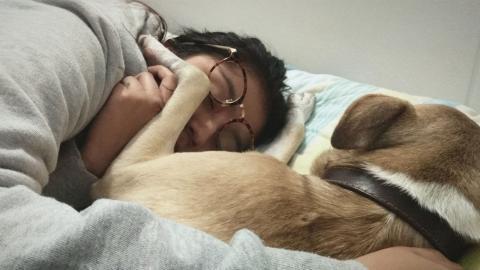 Haustiere im Bett: Das gilt es zu beachten