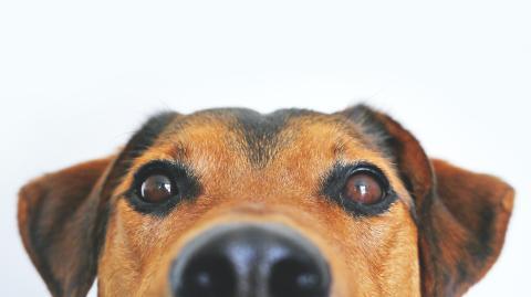Sprachbarriere: Diese Geste von Hunden wird immer falsch gedeutet
