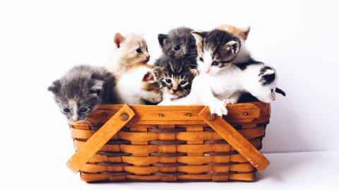 Tierpsychologie: Das sagt die Fellfarbe über deine Katze aus