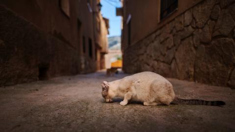 Dreibeinige Streunerkatze verzaubert alle mit ihrem traurigen Blick!