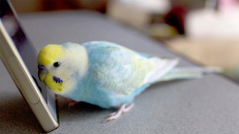 Papagei bestellt Essen, sobald sein Frauchen das Haus verlässt