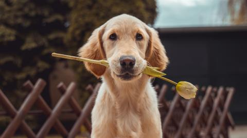 Diese lieb gemeinte Geste kann bei deinem Hund negative Gefühle auslösen