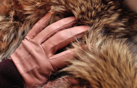 Israel verbietet weltweit den Handel mit Pelzen