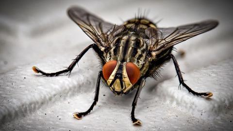 Life-Hack: So vermeidest du im Sommer Fliegen rund um den Mülleimer