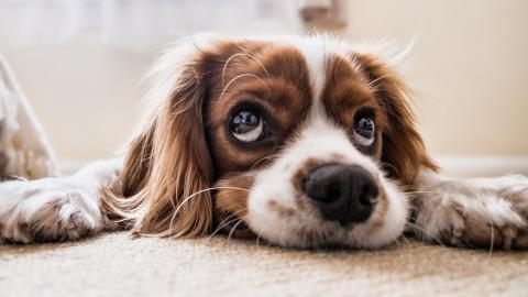 Mehr Nachfrage als Hunde: In der Corona-Krise trösten sich viele mit Haustieren