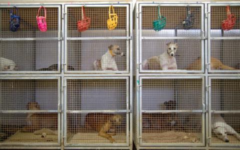 Verschärfte Regeln für Hundehaltung: Politik schaltet sich endlich ein, um weiteren Haustierboom zu vermeiden