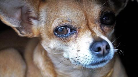 Darum schaut euch euer Hund bei seinem großen Geschäft in die Augen