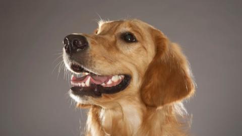So pflegt ihr die Zähne eures Hundes richtig