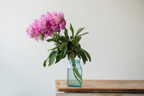 Dieses hochprozentige Getränk sorgt dafür, dass eure Blumen nicht so schnell verwelken