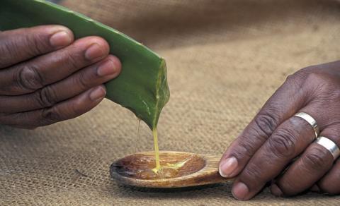 Beauty & Health: Das alles lässt sich mit dem Gel der Aloe Vera-Pflanze anfangen