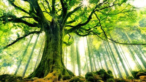 Erstaunliche Fähigkeiten: Drei spannende Fakten über Bäume